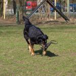 /vor_2012/fg-thumbs/P4025436 image